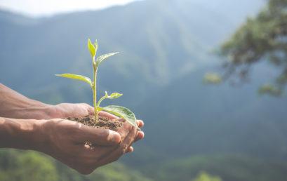 Aarder lanza el Premio Sostenible, una convocatoria de proyectos artísticos que luchen para mitigar el cambio climático